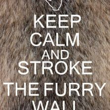 Keep calm and pet a furry friend